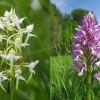 027-Orchideen-32-c