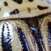 kartoffelkäfer_7509-3c