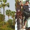 1000-Palmsaft-Ernte-c