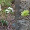 2040-Blumen-c